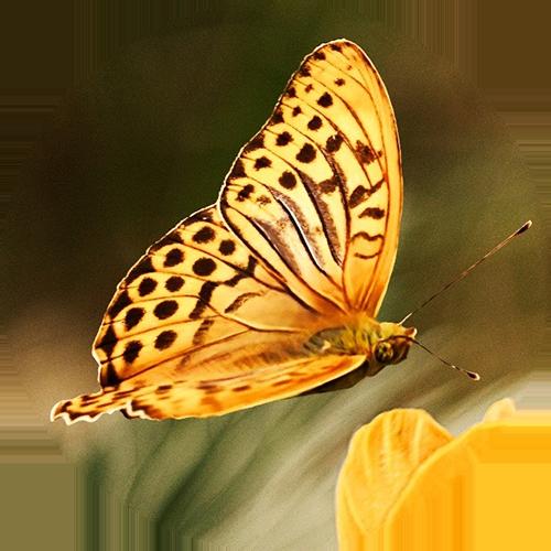 Laxmi-Sundara behandeling